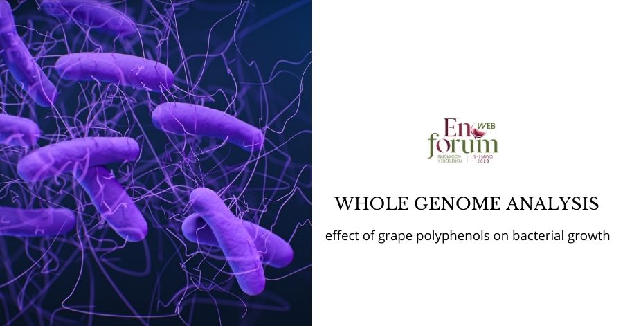 Whole genome analysis of two multiresistant escherichia coli strains. effect of grape polyphenols on bacterial growth
